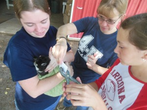 Connie Forsyth, center, helps a 4H member tattoo her rabbit.
